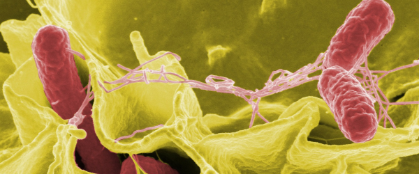infección-salmonella